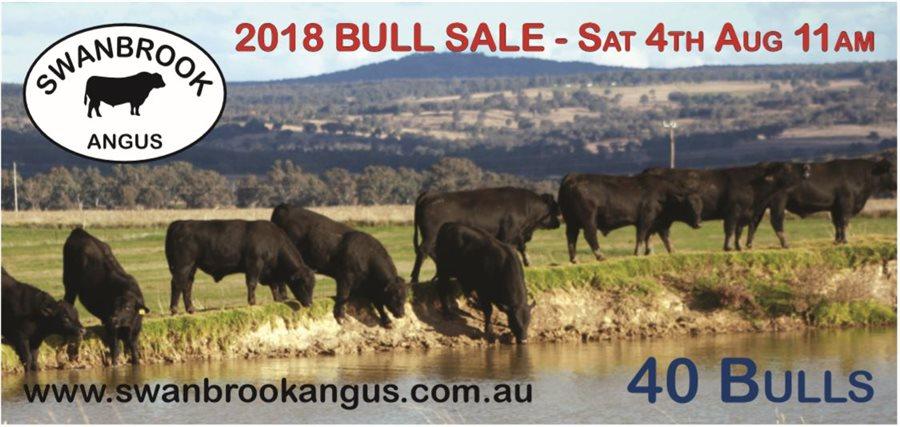 40 Swanbrook Angus Bulls - 11am Sat 4th August