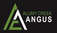 Alumy Creek Angus