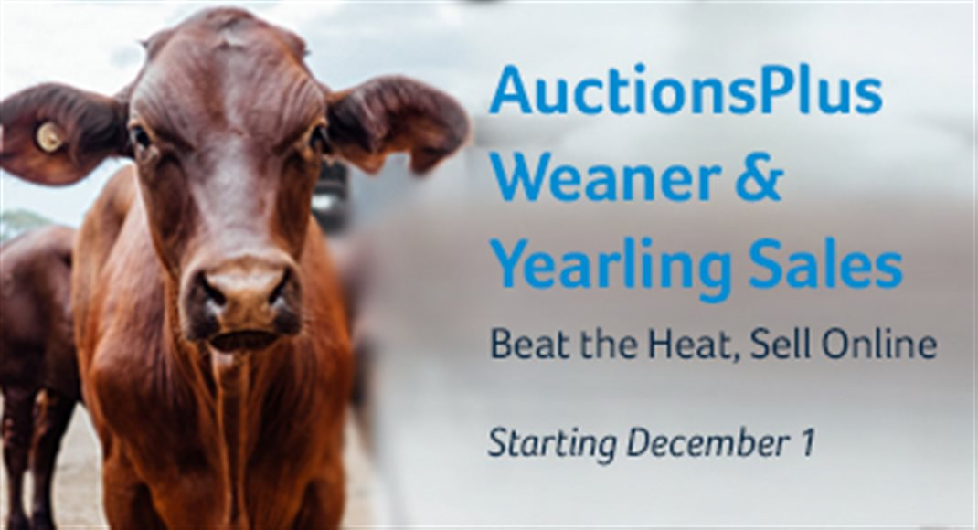 AuctionsPlus Weaner Sales Dec 17
