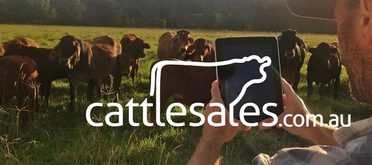 A premium marketing platform for the cattle industry
